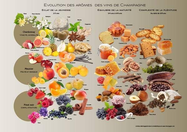 Carte des aromes de Champagne