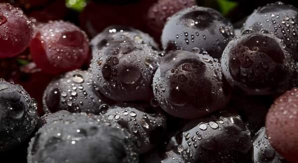 Quelle est la différence entre Vinicole et viticole
