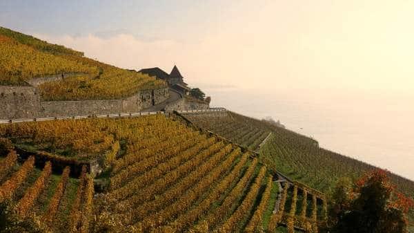 Vignoble de Lavaux en Suisse